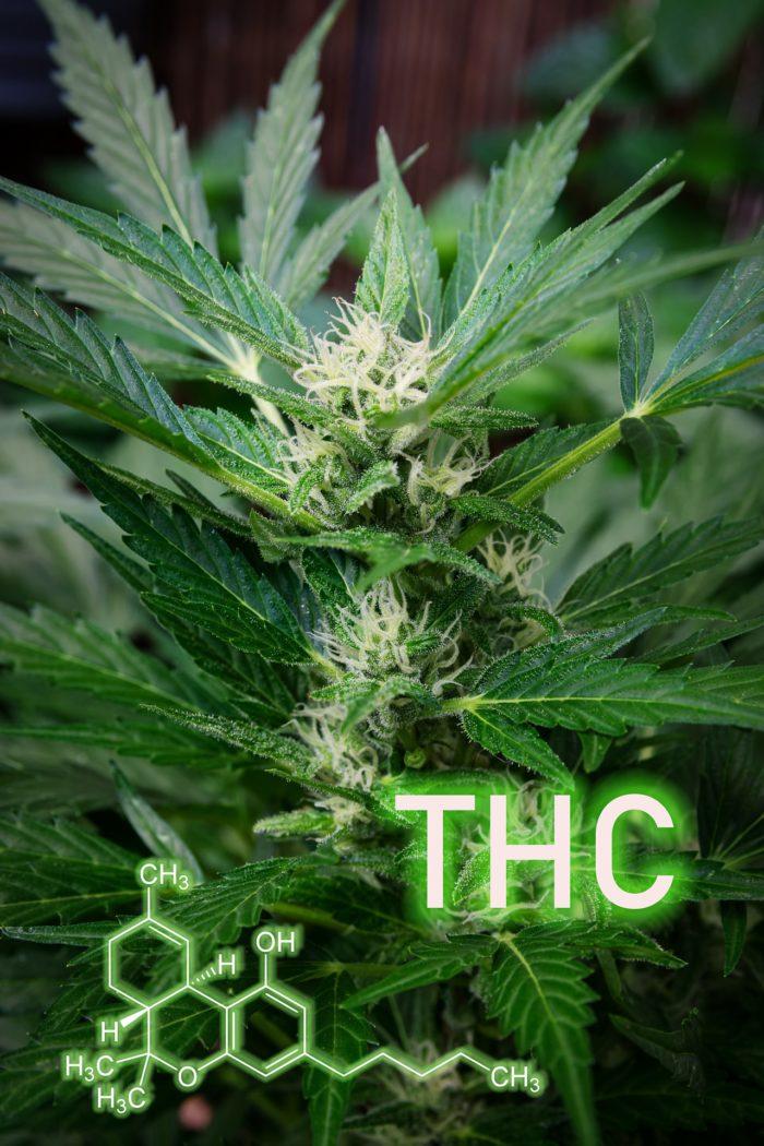 מריחואנה רפואית לסרטן - משוואת THC